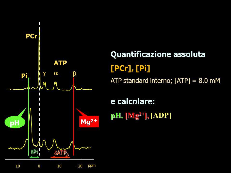 Quantificazione assoluta [PCr], [Pi]